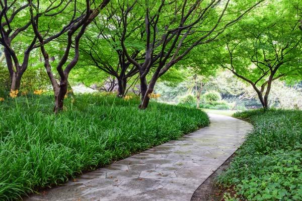 Chemin pavé à travers le sous-bois