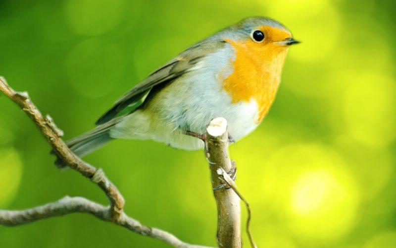 Dieu nourrit les oiseaux