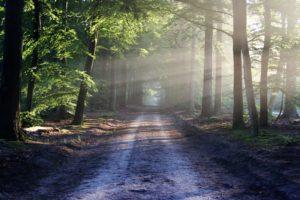 Chemin de forêt baigné de la lumière de dieu