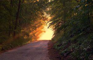 Lumière de Dieu au couchant à travers les arbres de la forêt